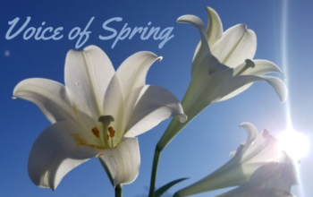 Voice of Spring
